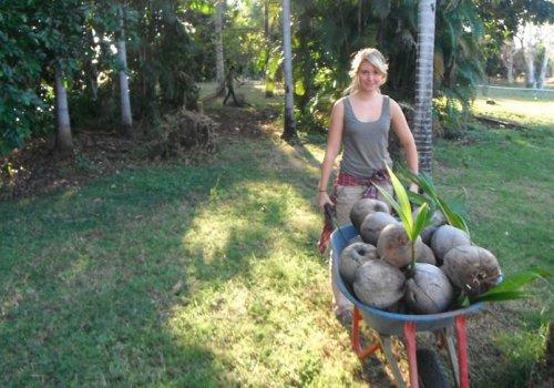 Fruitpicking-Jobs