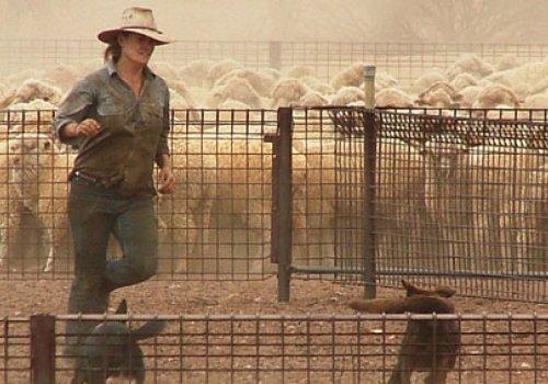 Professionelles Outback Farm Training