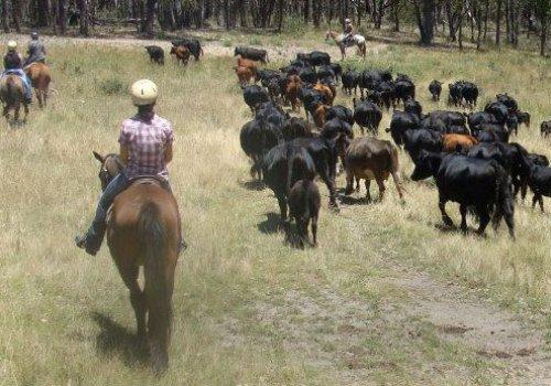 Reit- & Ranch-Kurs