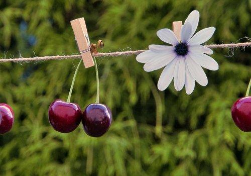 Ernte Guide (Harvest Guide)